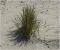 Pflanzen in den Dünen