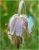 Glockenblume mit Falter in Dänemarks Dünen