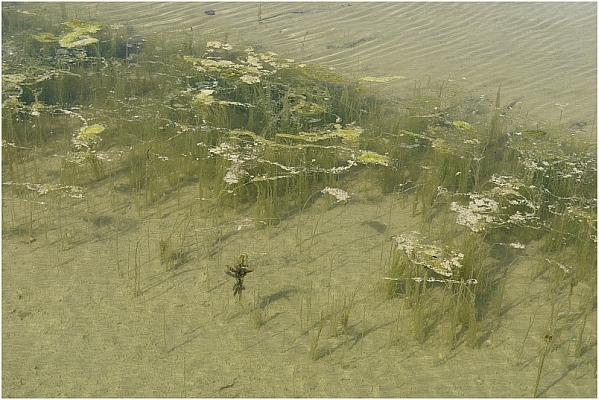 unterwasser strömung nordsee
